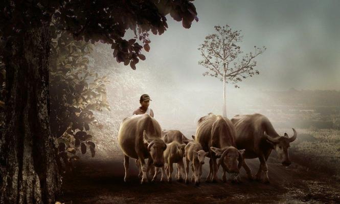 """""""اختبار إلكتروني وطني"""" حول حياة البقر ومميزاتها في الهند"""