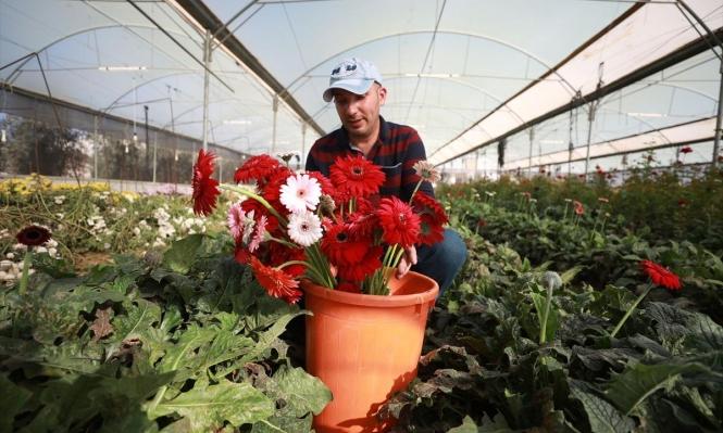 فلسطيني يقاوم احتكار الاحتلال زراعة الأزهار النادرة