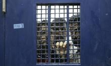 """إصابات جديدة بكورونا بين أسرى سجنَي """"النقب"""" و""""ريمون"""""""
