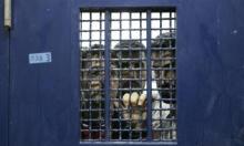 سجن النقب: 19 إصابة كورونا إجمالي الحالات عند الإسرى