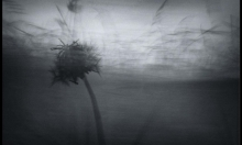 «تلاع الريح»... تفكيك التقوقع العربيّ في ديماس الأسطورة