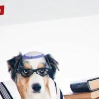 """الحملة الانتخابية لـ""""يهدوت هتوراة"""" تصوّر اليهود غير الأرثوذكس ككلاب"""