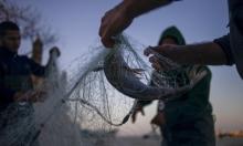 إلغاء حظر تسويق أسماك المتوسط