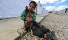 الأمم المتحدة: 60% من السوريين معرّضون لخطر الجوع هذا العام