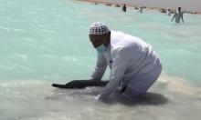"""""""جنوح نادر"""": إنقاذ عشرات الدلافين على شواطئ السعوديّة"""