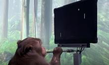 """""""مفاجئات ماسك"""": قرد يلعب بلعبة فيديو بواسطة شريحة بدماغه"""