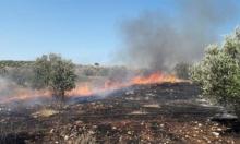مستوطنون يحرقون أشجار زيتون قرب بيت لحم