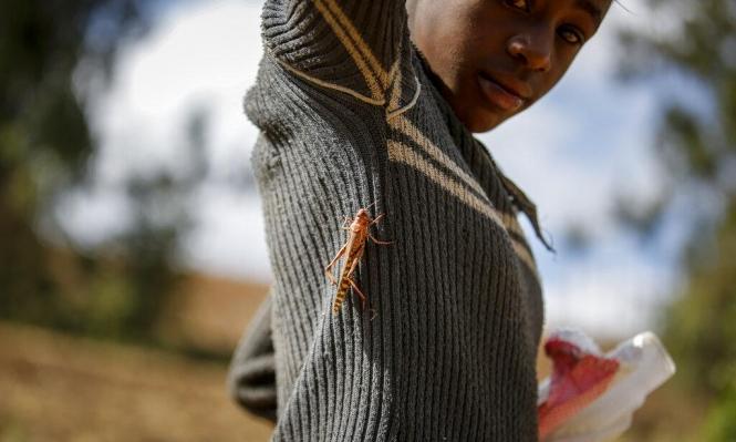 100 مليون شخص في إفريقيا يفتقرون للأمن الغذاني