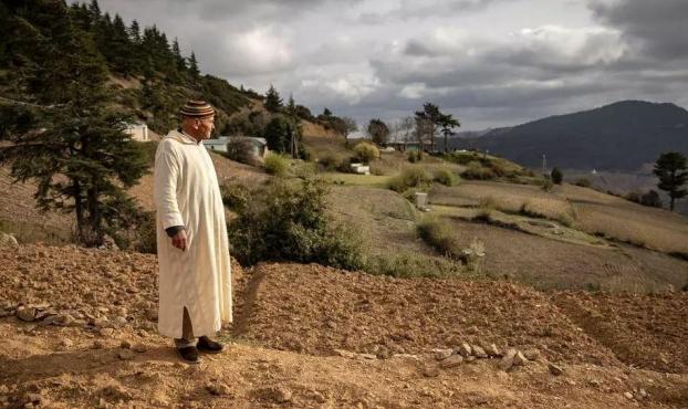 المغرب: مشروع تقنين زراعة القنّب الهندي.. المزارعون بين التفاؤل والتخوّف