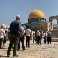 181 مستوطنا يقتحمون باحات المسجد الأقصى في القدس