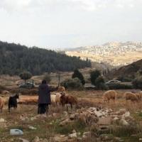 الاحتلال يستولي على 147 دونما قرب بيت لحم ويجرف أراضٍ في رفح