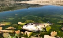 لبنان: نفوق أطنان الأسماك في بحيرة القرعون