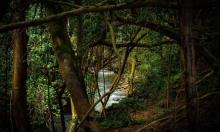 دراسة: غابات الامازون باتت مصدرًا لانبعاث الكربون