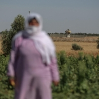 أمونة أبو رجيلة: الإصرار على إعمار الأرض الغزيّة القريبة من سياج الاحتلال