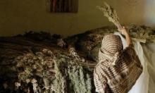 المغرب: المصادقة على قانون تقنين القنب الهندي