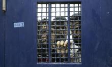 7 أسرى يعلّقون إضرابهم المفتوح عن الطعام