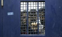 11 أسيرا في سجون الاحتلال يواصلون إضرابهم المفتوح عن الطعام