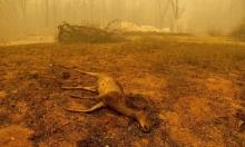 """تقرير خبراء المناخ في الأمم المتحدة سيتضمّن """"أشدّ تحذير"""" حتى الآن"""