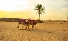 التغير المناخي يهدد منطقة الخليج العربي بحرارة لا تطاق