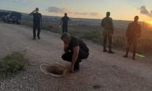فرار 6 أسرى فلسطينيين من سجن الجلبوع