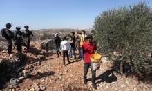"""مستوطنون يقتلعون 900 شجرة من سبسطية والاحتلال يهدم """"بركسا"""" بسلفيت"""