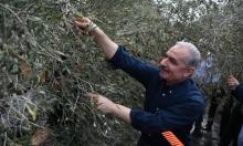 اشتيّة: الاحتلال اقتلع أكثر من مليونين و500 ألف شجرة
